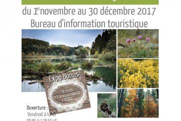 Expo forêt de légende – forêt de vie