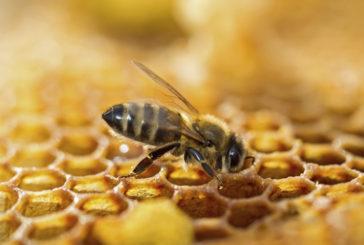 Déclaration des ruches.