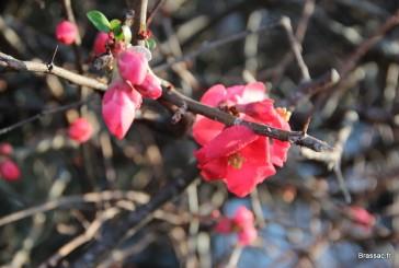 Le printemps serait-il déjà là …?