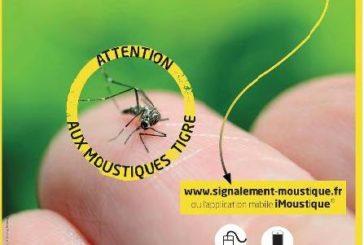 Le moustique «tigre» – Il est parmi nous.